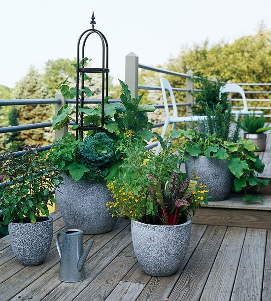 Container vegetable gardening...cucumbers, rosemary, swiss chard, kale, basil, eggplants, peppers...all in these pots!
