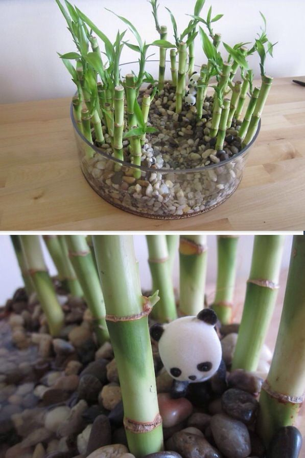 Miniature bamboo forest with panda bear.