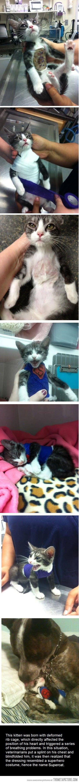 little kitty gets better!