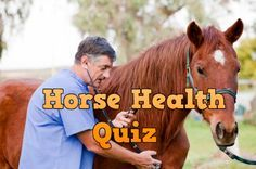Fun little quiz to see where you are in your horse health savvy. if you want to learn more, take one of our many EHC equine health and first aid courses for all levels of horsemanship from kids, youth, green adult, to advanced!  #equihealthcanada #horse #firstaid #horses #ehc