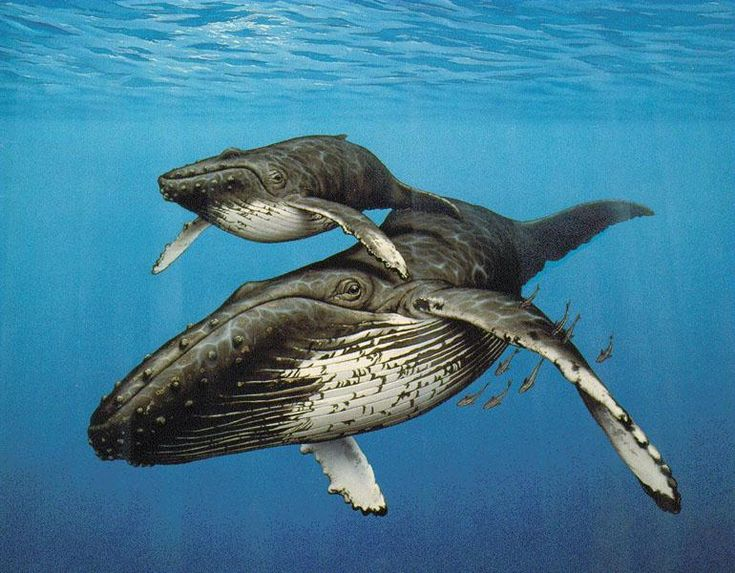 whales - Google Search