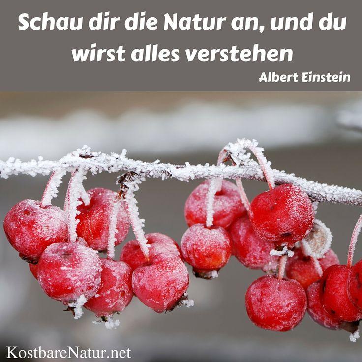 Schau Dir Die Natur An, Und Du Wirst Alles Verstehen   Albert Einstein.  Sprüche ...