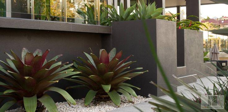 Landscape Design Brisbane: Featured Design Projects Paddington