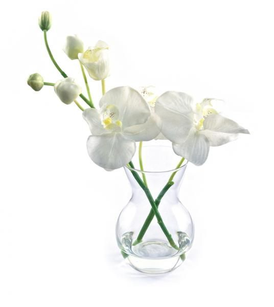 Phalaenopsis Orchid and buds in a pristina vase, set in Still Water™. White. Height 22cm. €18.50