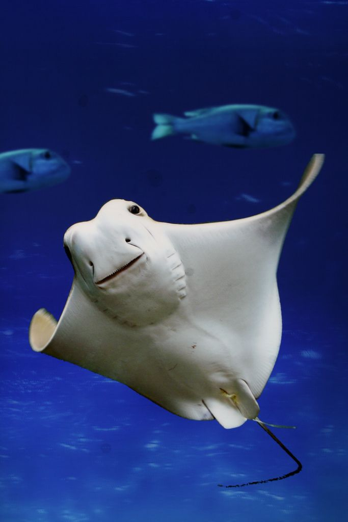 The 30 Cutest Sea Creatures To Ever Swim Their Way Into Your Heart