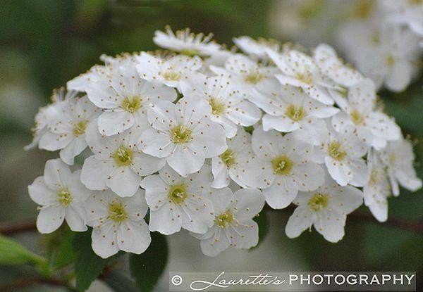 White Beauty - Photograph
