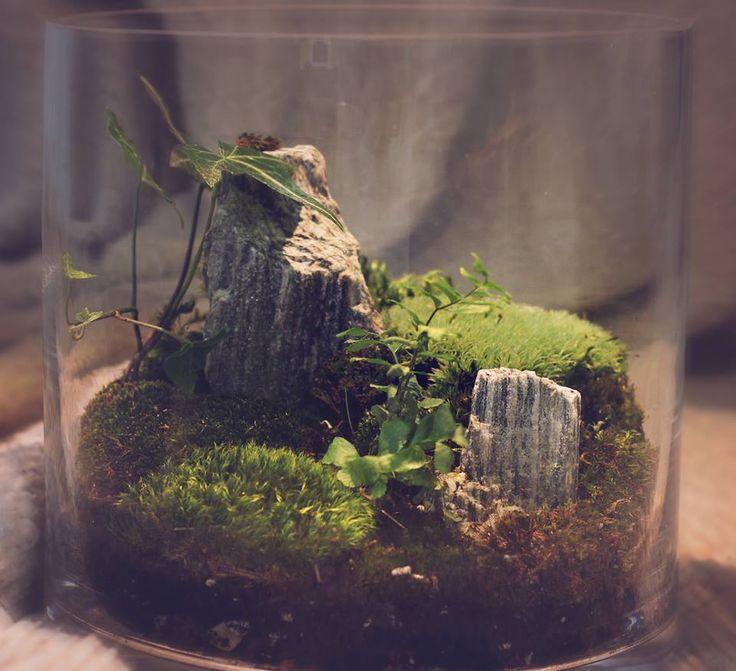 die besten 17 ideen zu moos terrarium auf pinterest moosgarten und terrarium. Black Bedroom Furniture Sets. Home Design Ideas