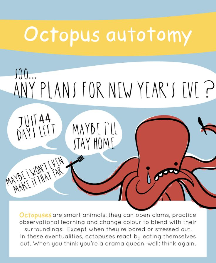 EEEW #005: OCTOPUS AUTOTOMY