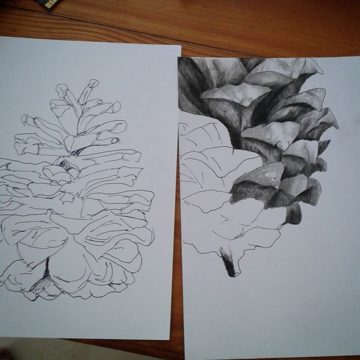 Progress Drawing of Charcoal Pinecones. Stace Scallan