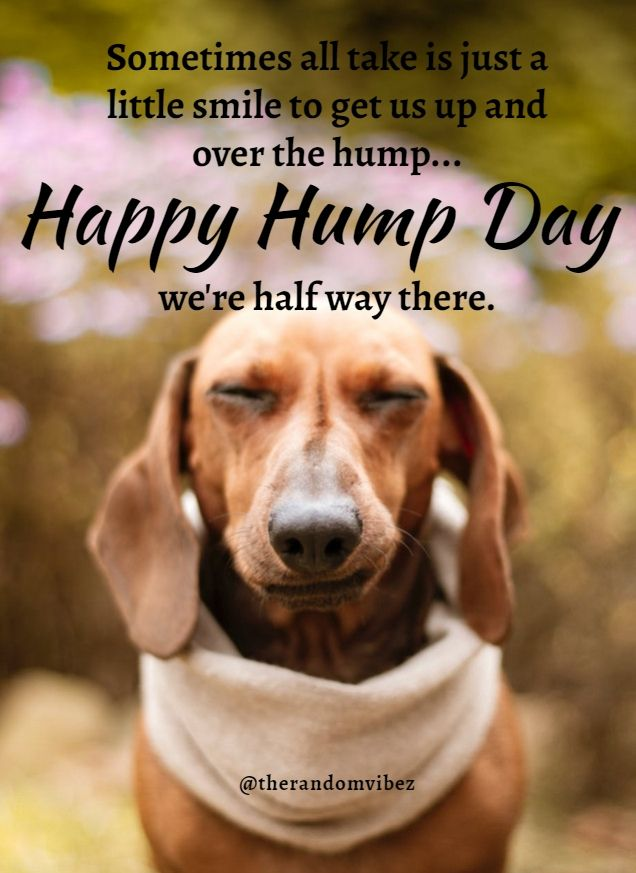 60 Funniest Hump Day Memes To Survive Wednesdays Hump Day Quotes Morning Quotes Funny Funny Hump Day Memes