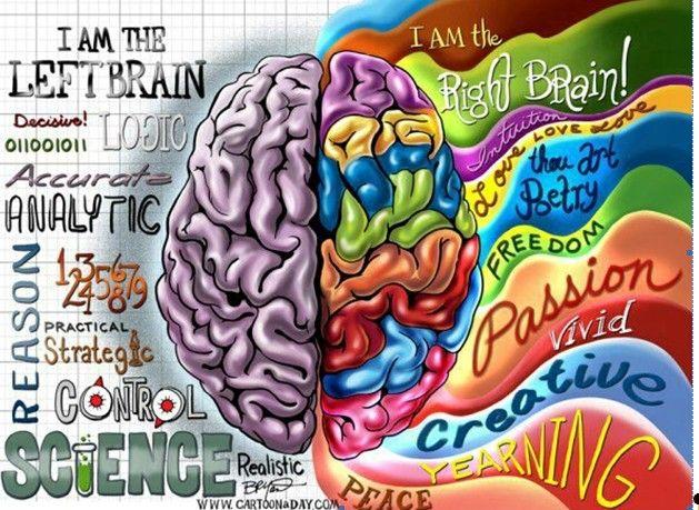 left brain - right brain                                                       …