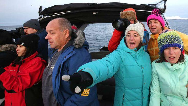 Киты! #whale #norway