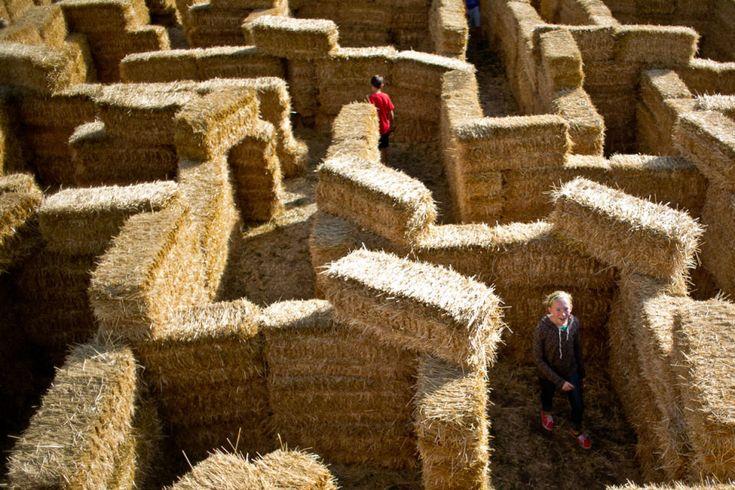Mandeville Hay Maze w Bozeman (USA) | fot. Adrian Sanchez-Gonzalez/Chronicle