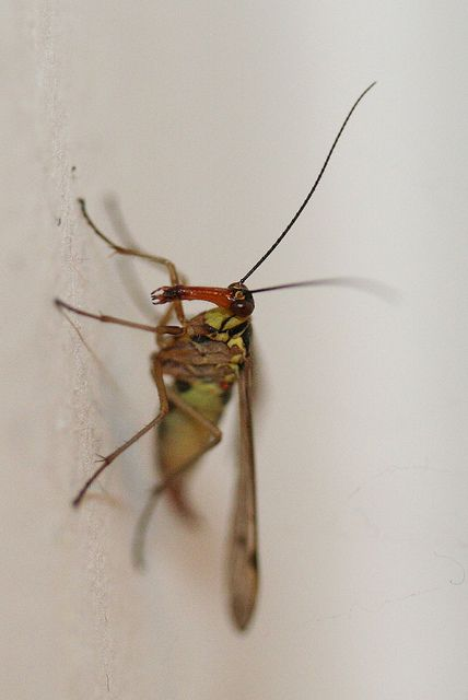 Winged insect in my bathroom | 1/200 sec, f/2.8, 60 mm, ISO 1600, flash on