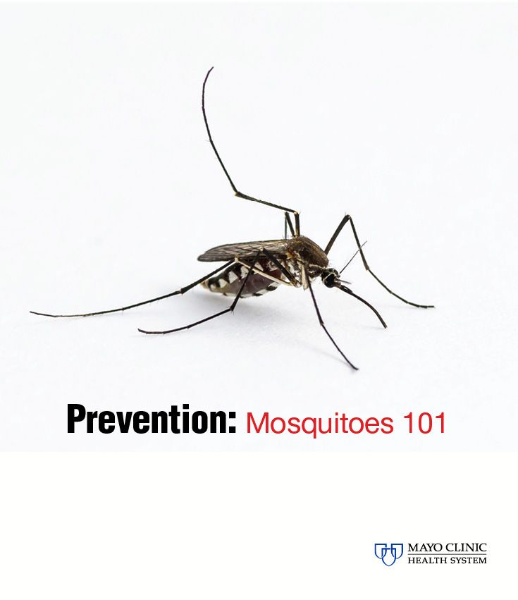 how to avoid mosquitoes at home