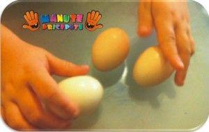 Experimente cu oua