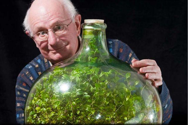 Unglaublich aber wahr: Diese Dreimasterblume (auch Gottesauge genannt) gedeiht seit 40 Jahren ohne frisches Wasser und frische Luft. Der Engländer David Latimer hatte sie im Jahr 1960 in das Glas g…