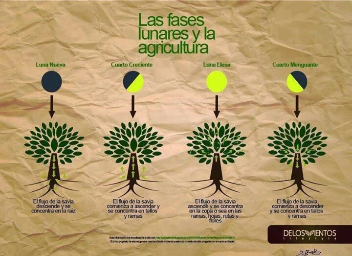 Plantas y cultivo  calendario lunar