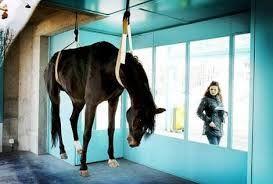 een opgehangen paard