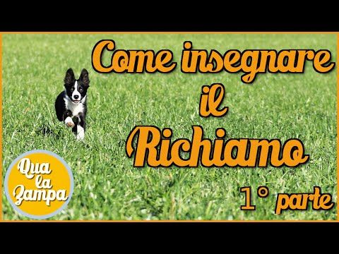 Il Richiamo - 1° parte | qua la zampa | Qua la Zampa - LaCumpa.it