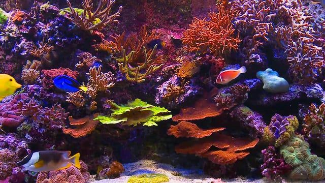 The follow up to our popular Aquarium TV Jukebox DVD, AQUARIUM TV JUKEBOX 2 has eight great aquariums all filmed using high quality Full HD cameras, to turn your television into a spectacular aquarium... Eight very different aquariums to suit every TV and every situation