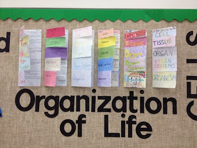 Cards {and} Cardigans: Student Project Display