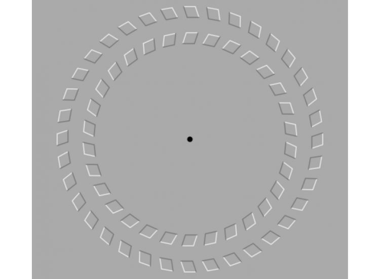 Illusion de cercles fixer le point noir et reculer/avancer