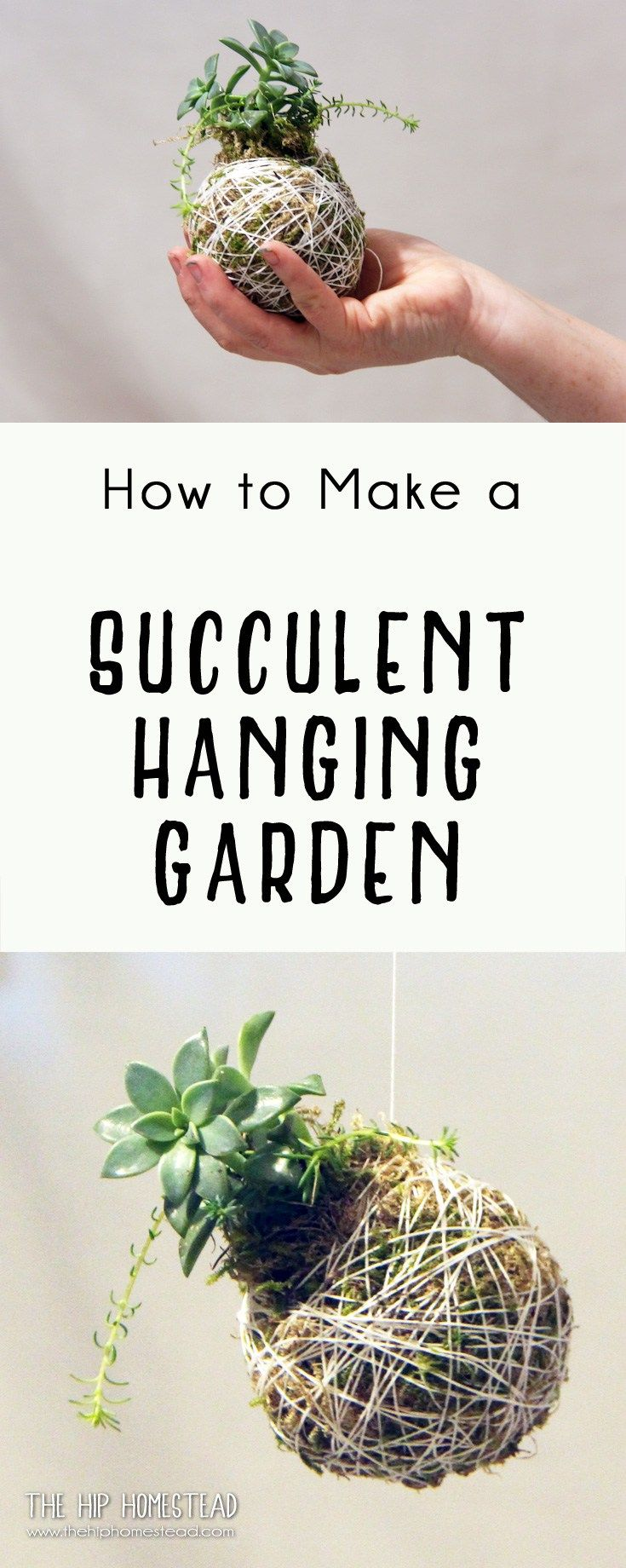 90 best succelents images on pinterest succulents gardening and