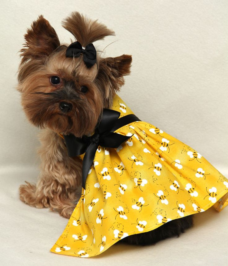 403 Best Dressed Up Yorkie Images On Pinterest