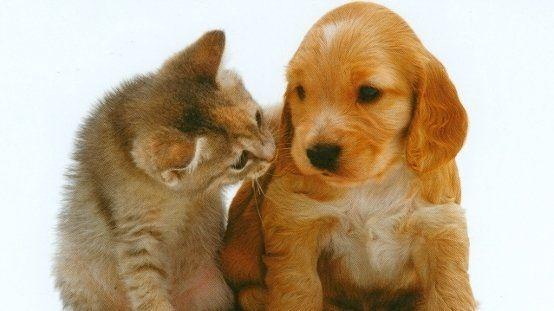 Petizione · La carta dei diritti degli animali di Milano · Change.org