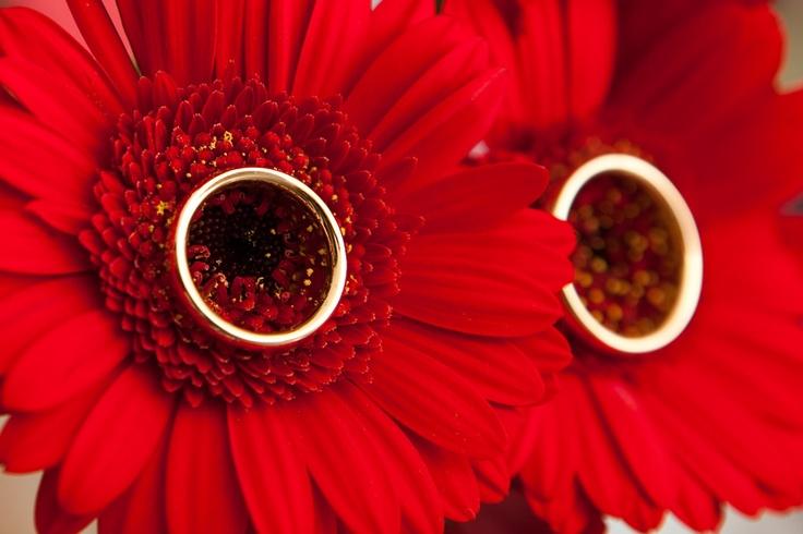 Bruidsfotografie Amsterdam, trouwringen, bruiloft #trouwring #bruidsfotograaf #bruidsfotografie Dario Endara