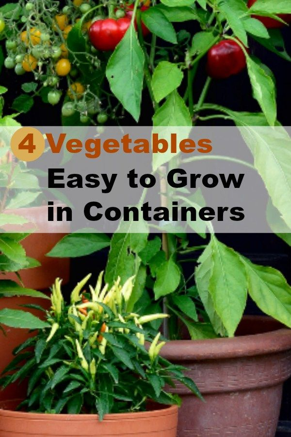4 Vegetables That Are Easy To Grow In Containers All Year Round