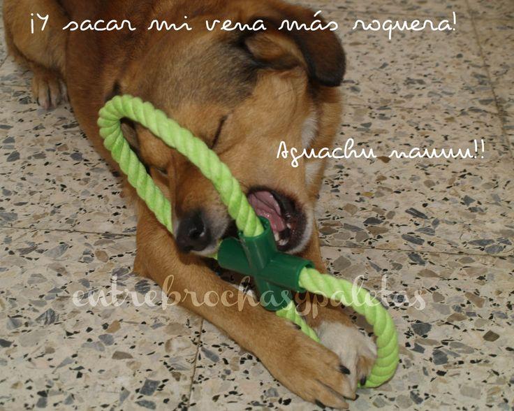 Perros sonrientes | Tigre y la Pet secret de diciembre http://www.entrebrochasypaletas.com/2014/01/perros-sonrientes-tigre-y-la-pet-secret.html #perros #mascotas #pets #dogs #petsecret
