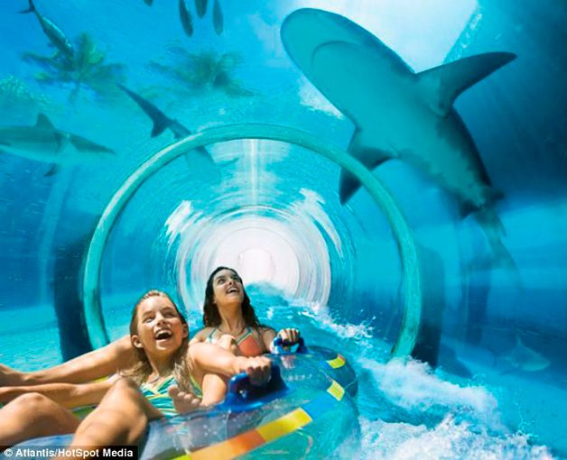 Tobogã transparente é construído no meio de um tanque com tubarões.