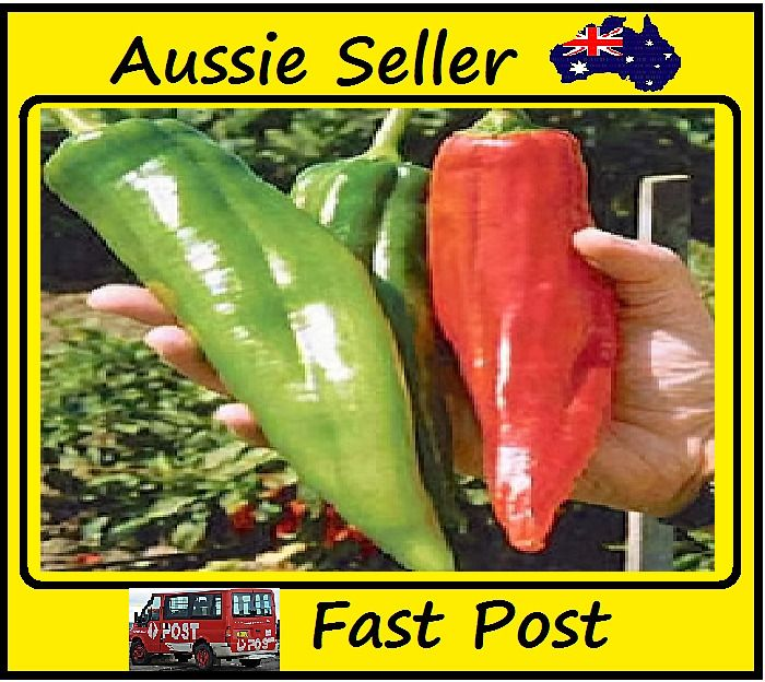 Massive Red Hot Chilli Pepper Seeds Easy Grow Home Garden 100 Seed Lots