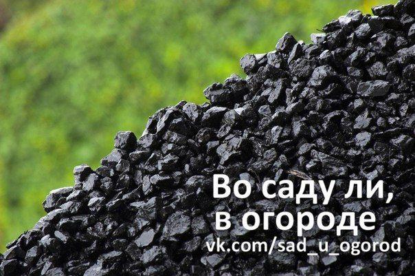 Уголь как удобрение | Дачный сад и огород