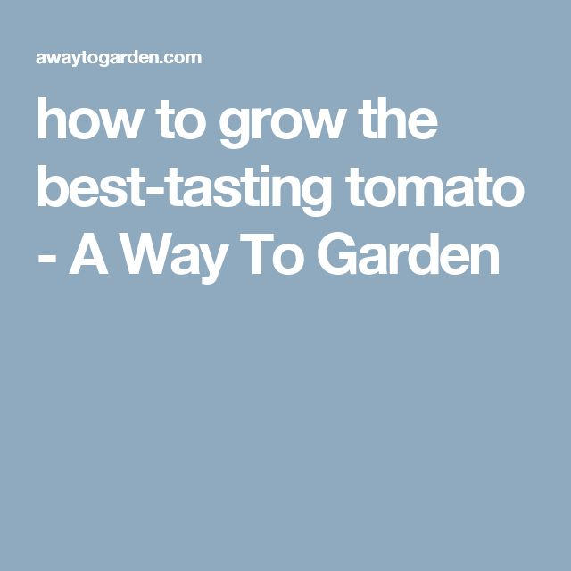 how to grow the best-tasting tomato - A Way To Garden