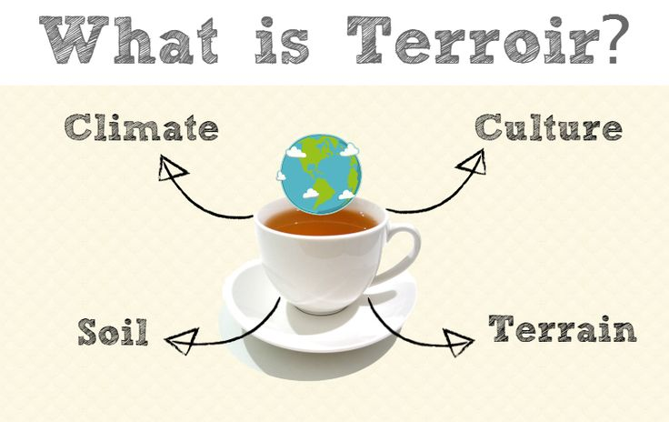 What is Terroir? | Tea For Me Please: What is Terroir?