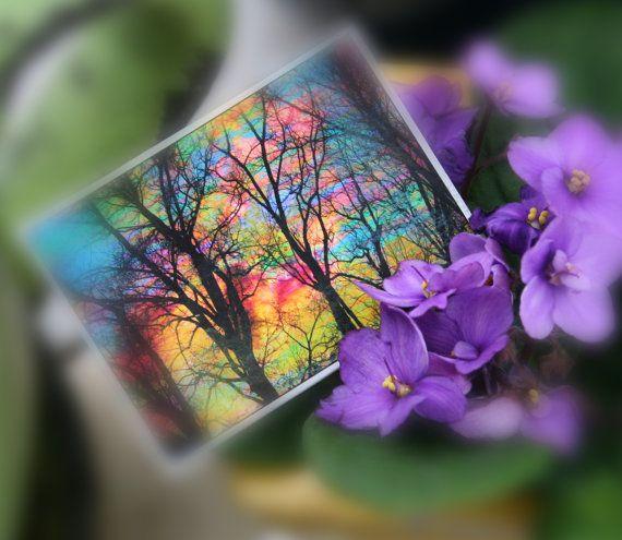 Gift under 15, Cotton candy, ACEO, ATC, Orginal, art, photography, nature, Fine art photograph, miniature, trees, Bare trees, tree art