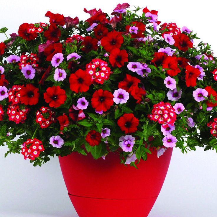 Live Flower Garden : Images about bountifulplants on pinterest