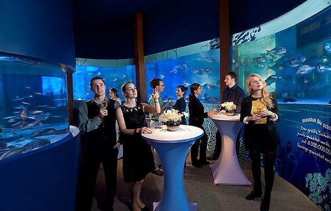 Eine unvergessliche Weihnachtsfeier in den tiefen des Meeres könnt Ihr im AquaDom & SEA LIFE Berlin erleben. Hier genießt Ihr das Großaquarium exklusiv in den Abendstunden, begegnet Seesternen, süßen Seepferdchen, faszinierenden Rochen und eleganten Haien. Als Höhepunkt erwartet Euch die atemberaubende Fahrt im AquaDom, dem weltgrößten, freistehenden zylindrischen Aquarium seiner Art.
