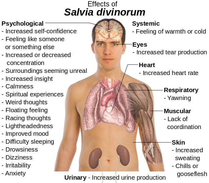 File:Effects of Salvia Divinorum.svg