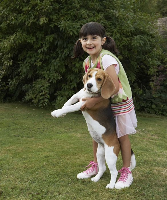 Top 10 Family-Friendly Dogs