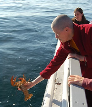 In Nova Scotia, the monks of Gampo Abbey purchase the last catch of the season and release the lobsters.