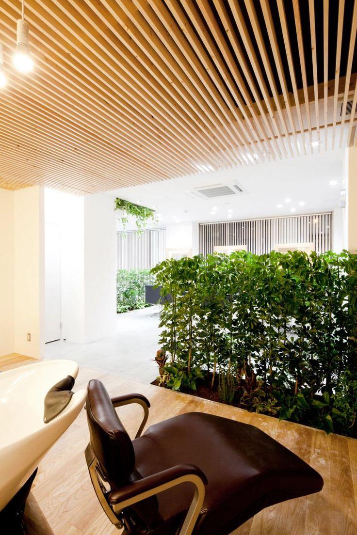 plafond | bois | plante séparation
