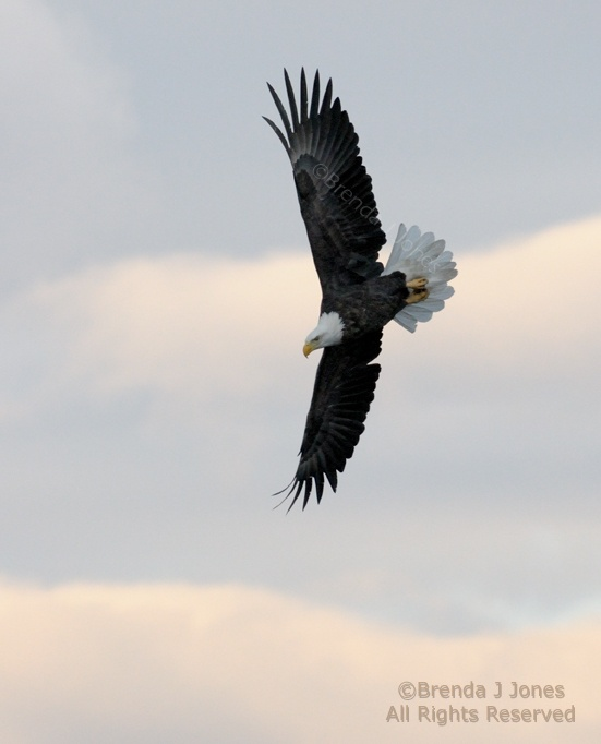 10 Best images about Eagles on Pinterest | Eagle cam ...