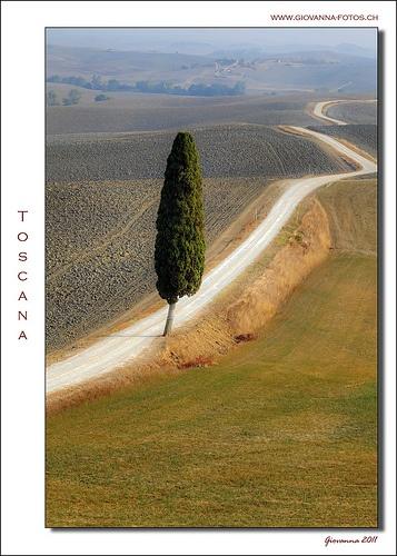 Toscana - Cipresso