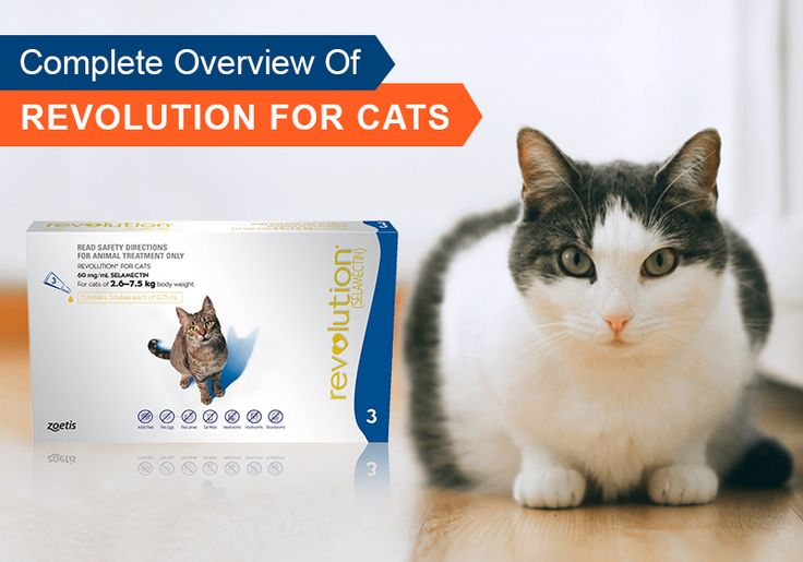 #Complete Overview Of #Revolution For Cats - Know More About Revolution Heartworm Treatment -