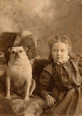 Victorian Pug. Carlini nell'epoca vittoriana
