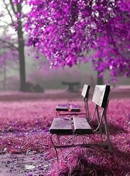 En mi imaginación ahora estoy ahí sentadita :) radiant-orchid-bench-from-pinterest.jpg 258×350 pixels